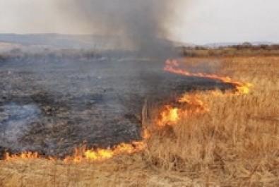 Екологи нагадують: випалювати суху траву заборонено